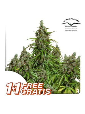 Dutch Passion - Auto Mazar