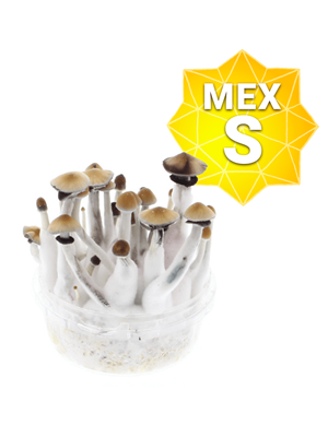 Mexican Growkit - Small